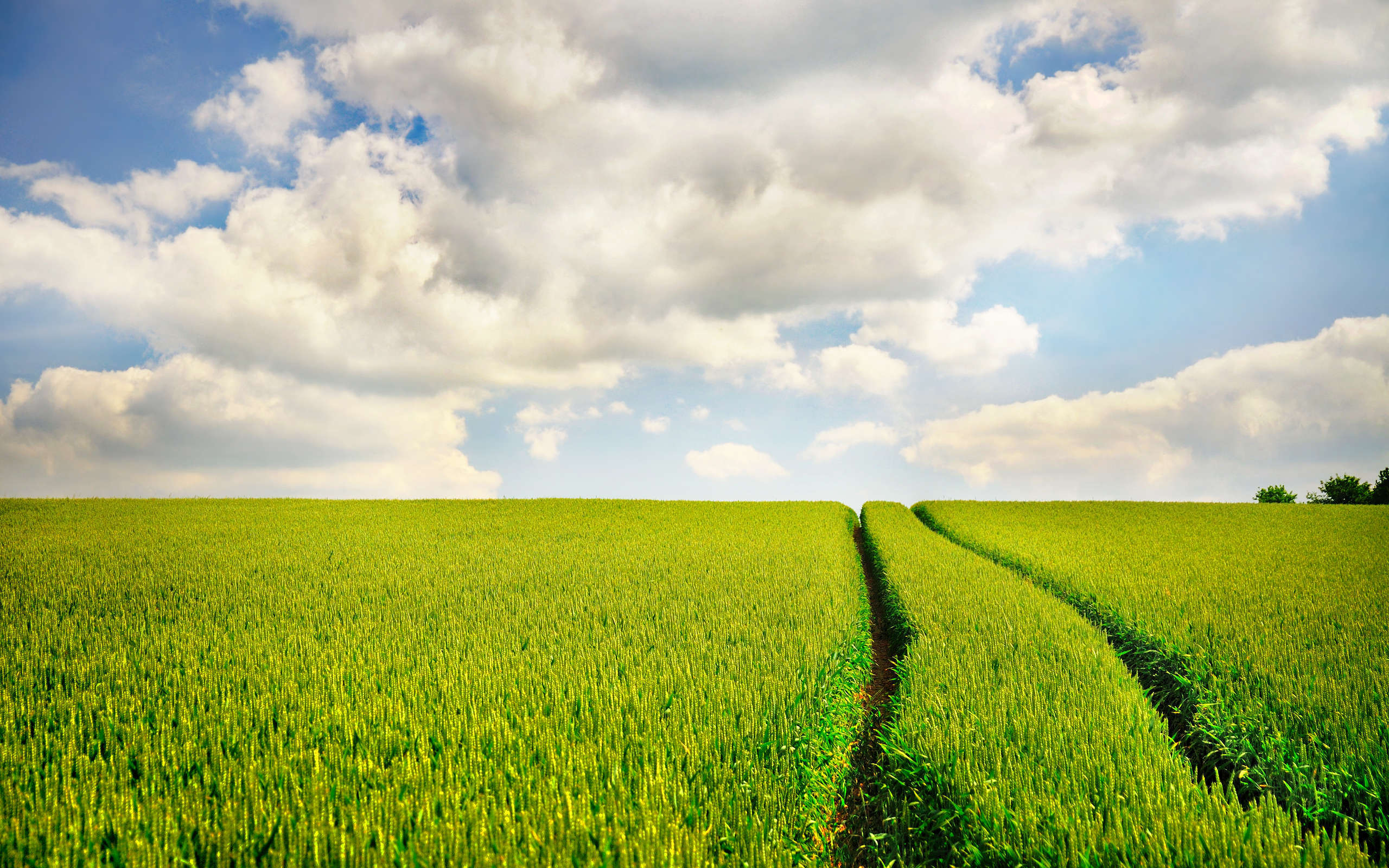 field-road-sky-signs-nature-photo-wallpaper-with-grass-grass-grass-wallpapers-fields-road